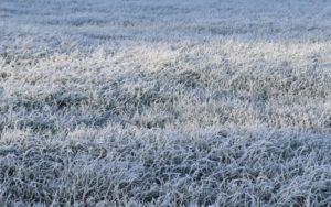 Prairie hiver